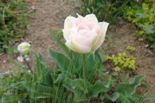 4月のお庭❀❀❀