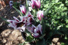 お庭の花・・・