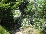 初夏のお庭・・・